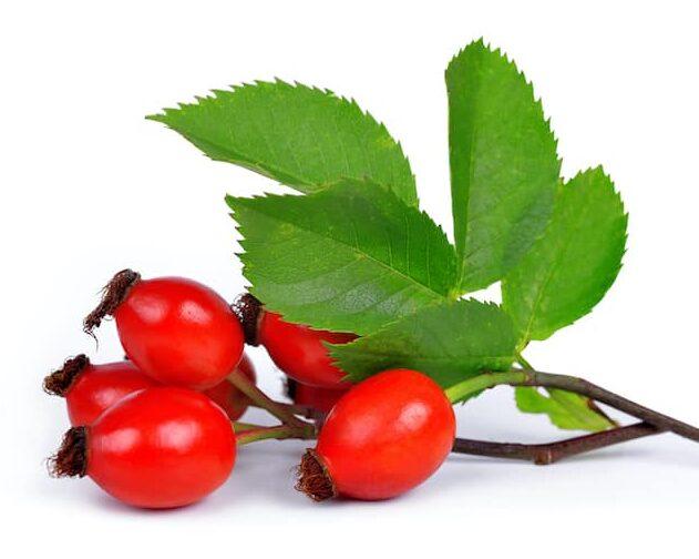 """Bulgarischer Bergtee - Hagebuttenfrüchte Bergtee / Natürlicher Kräutertee Hunds-Rose (lat. Rosa canina) (Шипка/Schipka auf bulgarisch genannt) – Die Früchte der Hagebutte sind sehr gesund. In der Volksmedizin ist diese Pflanze als """"die Königin der Kräuter"""" bekannt."""
