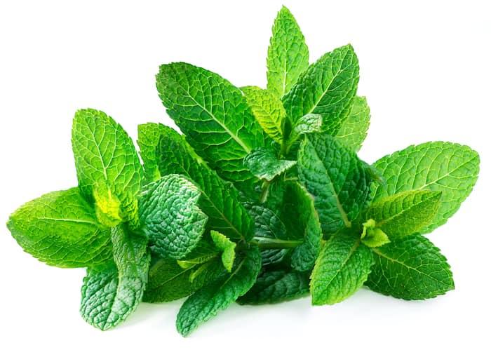 Bulgarischer Bergtee - Pfefferminz Bergtee / Organischer Tee von Pfefferminze (lat. Mentha) (Мента/Menta auf bulgarisch genannt) – Es gibt keine andere Pflanze mit so einem unverwechselbaren Duft.