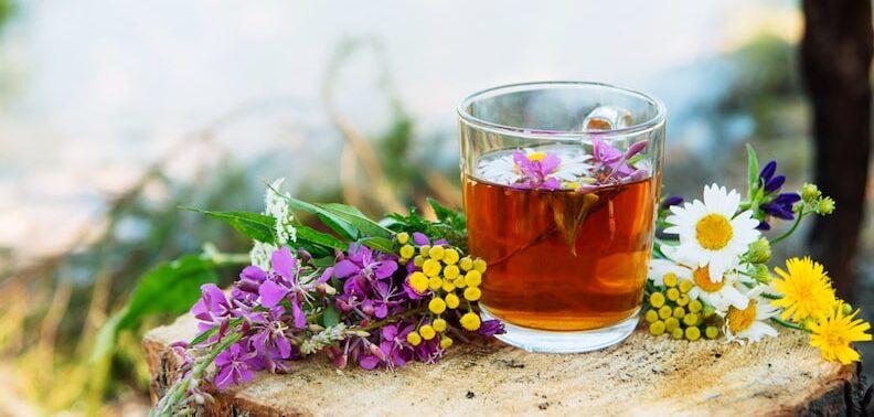 Bulgarischer Bergtee 5 Das Trinken vom bulgarischen Bergtee ist eine Möglichkeit, mit vielen verschiedenen Geschmacksrichtungen zu experimentieren