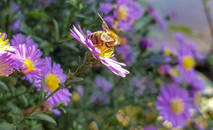 Bienenhonig 3 In der Nähe vom Schwarzen Meer, in der Umgebung von der Stadt Nessebar befindet sich das einzigste lebendige Bienenmuseum auf dem Balkan.