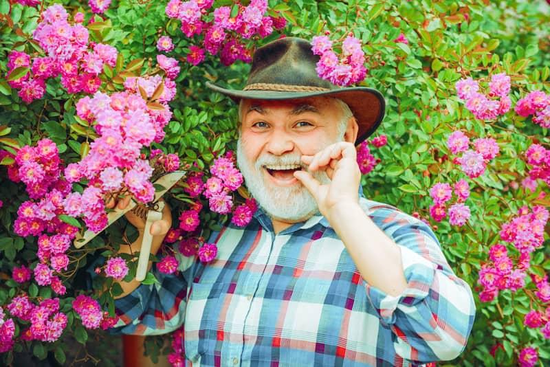 bulgarische Rose 1 Während der Rosenknospenbildung im Februar ist in Kazanlak das Wetter mild und die Rosen können nicht abfrieren.